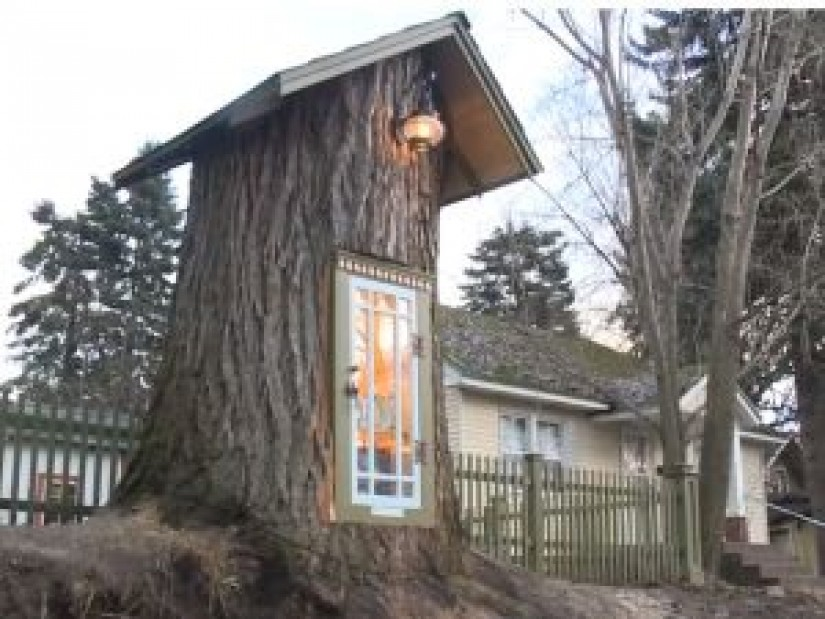 The 110-year-old tree created the most original and sweetest library ever